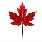 maple leaf(1)